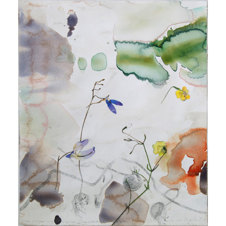 Bladderwort species II – Giraween flood plain, NT, watercolour on paper, 2012