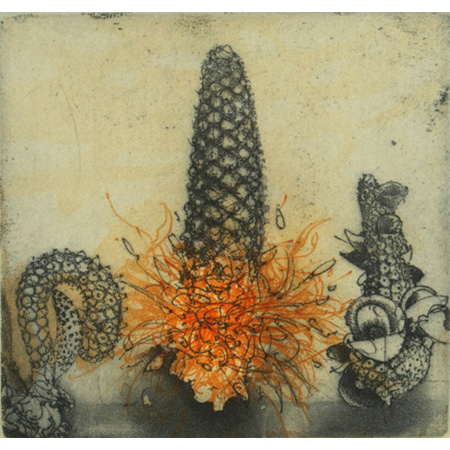Three Banksia Parts, etching