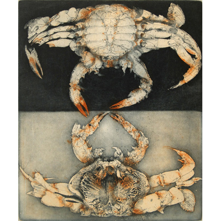 Blue Mud Bay Crab, etching, 2009