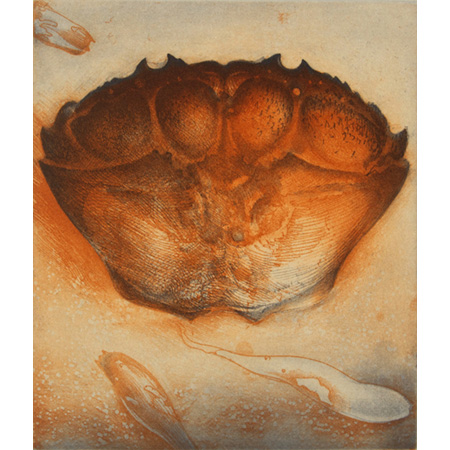 Carapace, etching,