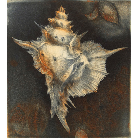 Shell, etching