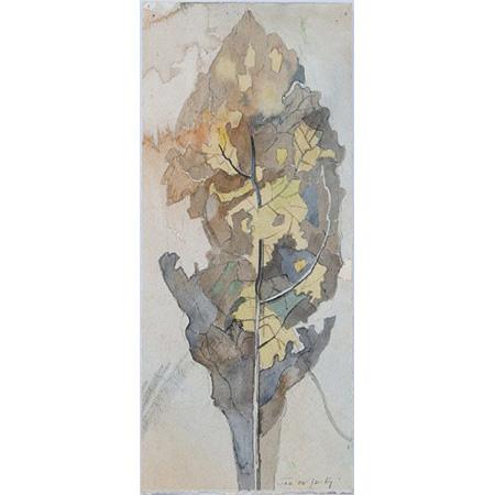Lamington Leaf, watercolour and graphite, 29.5 x 14cm
