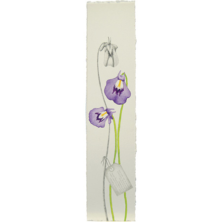 Utricularia hamiltonii, watercolour and graphite on paper by Jasmine Jan