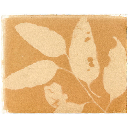 Eucalyptus shadow II, anthotype on watercolour paper