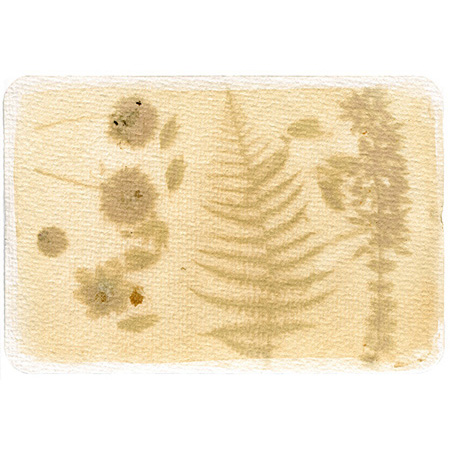 Flowers from the blanket bog I, anthotype on watercolour paper