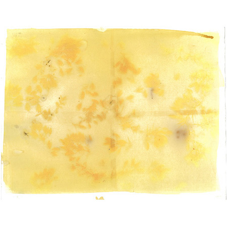 When the gorse is out of blossom…, anthotype on watercolour paper
