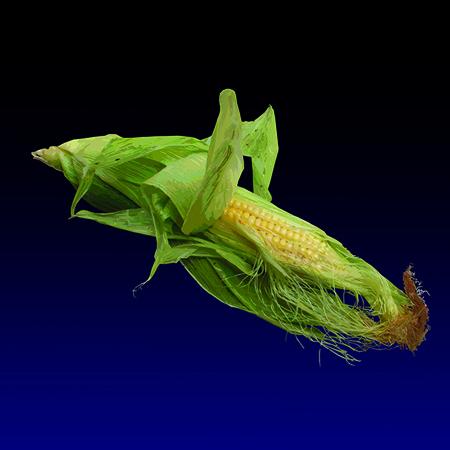 Furmintuni - Corn, limited edition digital print