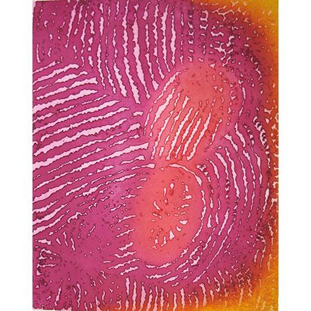 Parwalla etching by Elizabeth Nyumi.