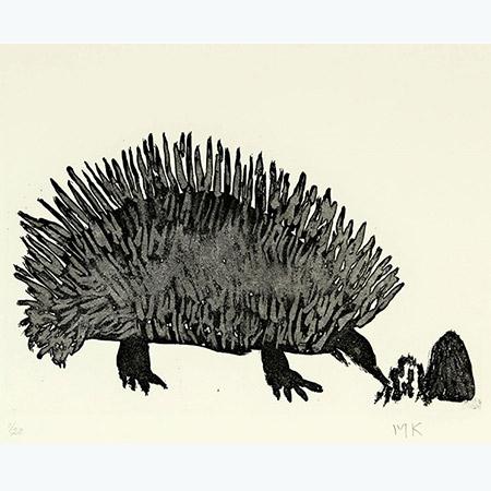 Nyinbu – Echidna, etching by Marjorie Keighran